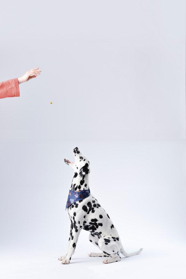 Hund bliver fodret